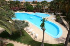 Apartment with swimming pool in Corralejo